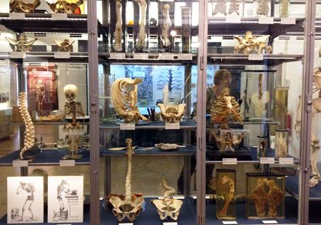 Museo_historia_medica_Berlin