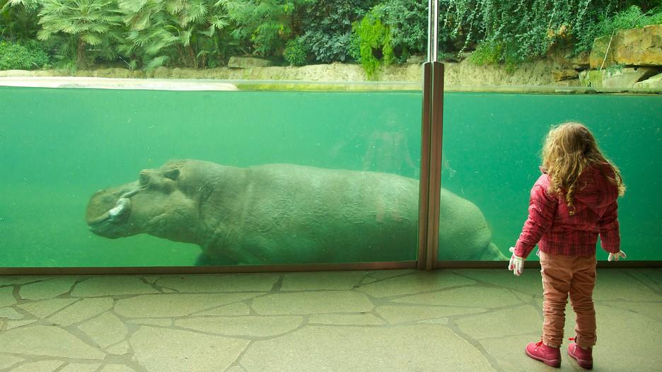 Berlin-Zoo-55941
